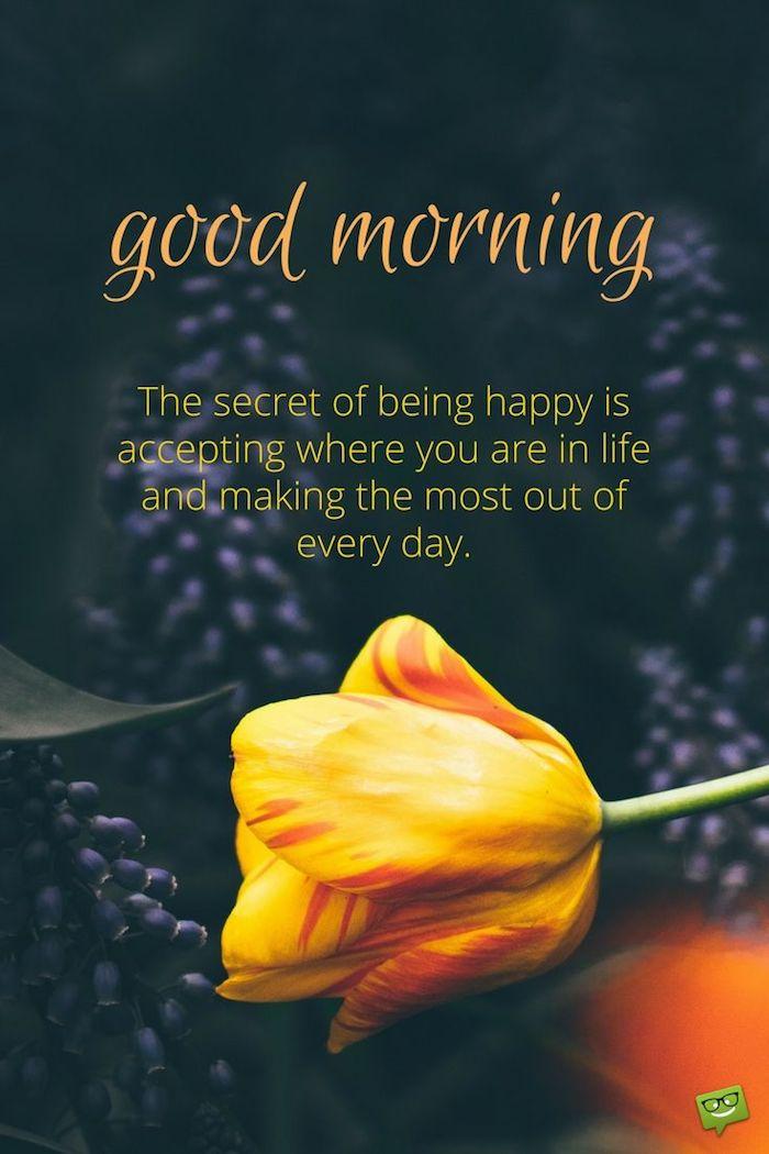 bilder guten morgen, ein bild mit einer großen gelben rose und grünen blättern, guten morgen bilder für whatsapp kostenlos