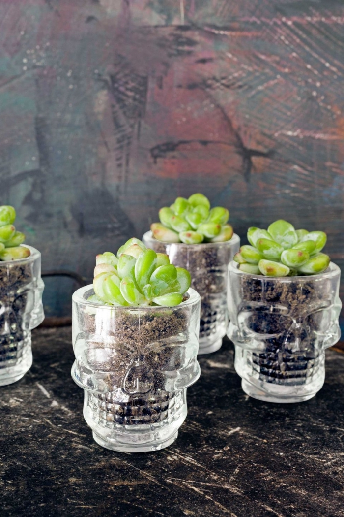 halloween ideen, gläser in der form von schädeln, kleine grüne pflanzen, tischdeko, blumentöpfe