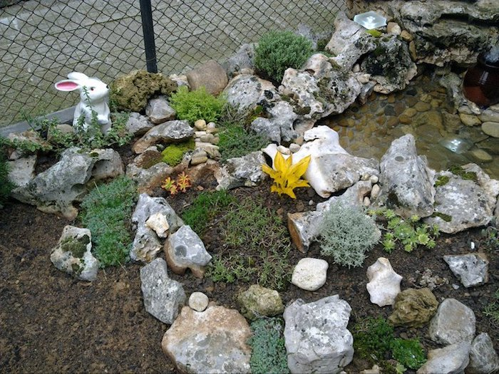 kleiner weißer hase, eine dekorative gartenfigur im kleinen steingarten mit grauen steinen und gelben blumen und grünen sukkulenten