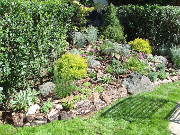 grüner rasen und ein kleiner steingarten mit grünen sukkulenten und violetten blumen und einer hecke, gartengestaltung bilder
