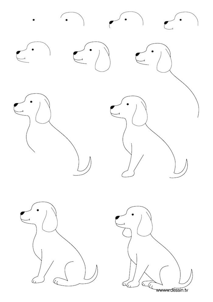 Wie zeichnet man einen Hund, ausführliche Anleitung in elf Schritten, leichte Zeichnung für Kinder