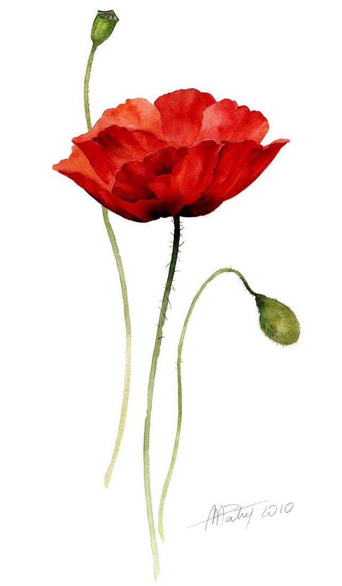Wie zeichnet man einen Mohn, Blume zeichnen mit Aquarellfarben, große rote Blüte