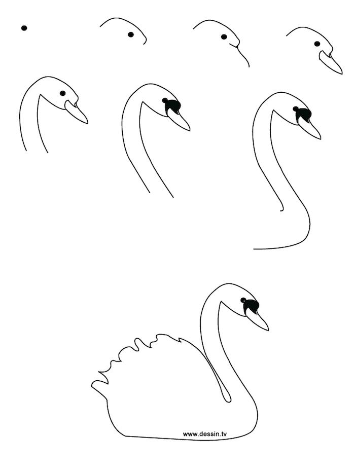Schwan zeichnen lernen in acht Schritten, Anleitungen für Kinder und Anfänger, leichte Zeichnungen