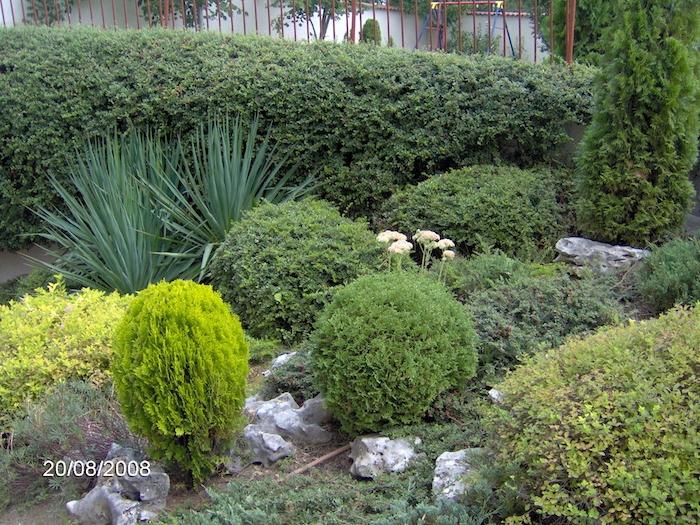 kleiner grüner garten mit grünen pflanzen und sukkulenten mit grünen blättern und einer hecke, gartengestaltung bilder