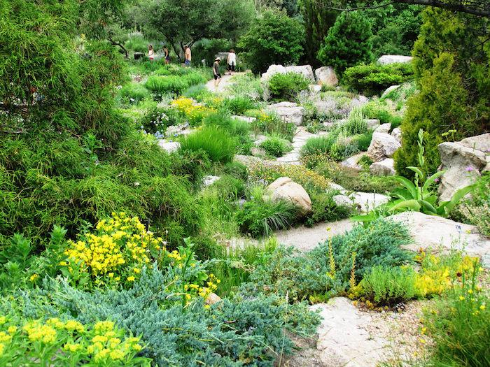 gelbe kleine blumen mit grünen blättern und graue steine in einem steingarten mit bäumen mit grünen blättern