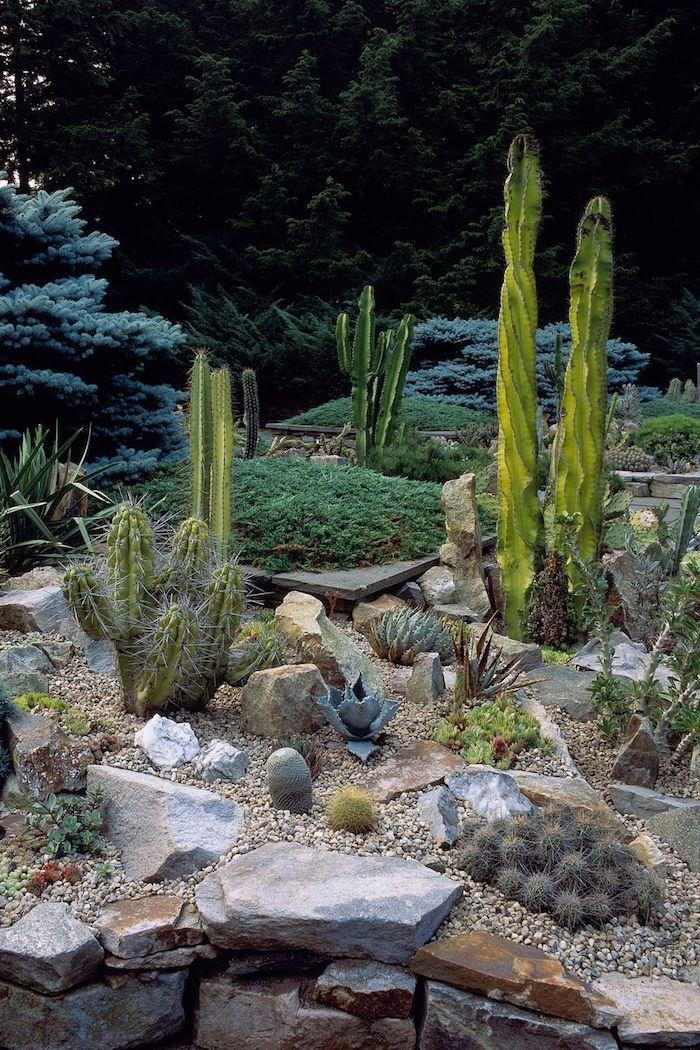 wald mitr vielen grünen bäumen und ein kleiner steingarten mit grünen sukkulenten pflanzen für steingarten und steine für steingarten, gartengestaltung mit steinen