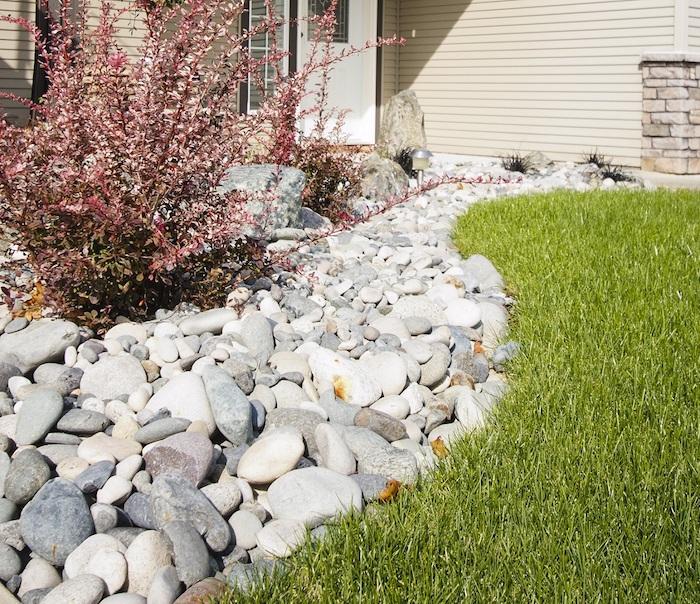 kleiner pinker strauch und ein grüner rasen und weiße und graue steine für steingarten und ein haus