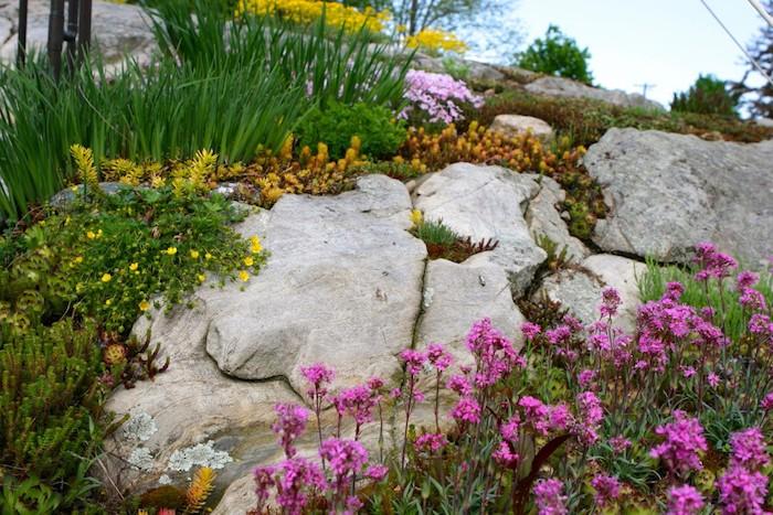 gelbe und violette blumen und grüne sukkulenten pflanzen für steingarten mit grauen steinen