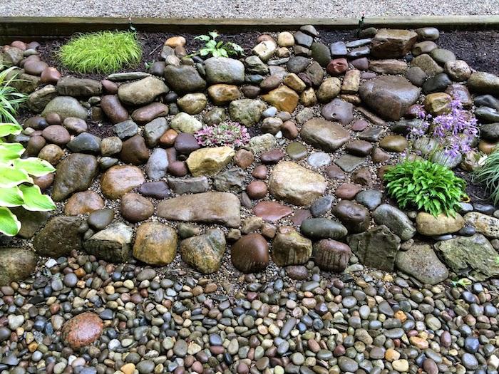 steingarten bilder mit vielen kleinen grauen und braunen steinen für steingarten und violetten blumen mit grünen blättern