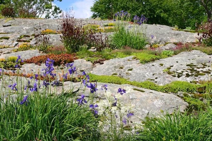 blauer himmel mit weißen wolken und kleiner garten mit violetten blumen und gelben blumen und grünen kleinen sukkulenten, einen steingarten anlegen