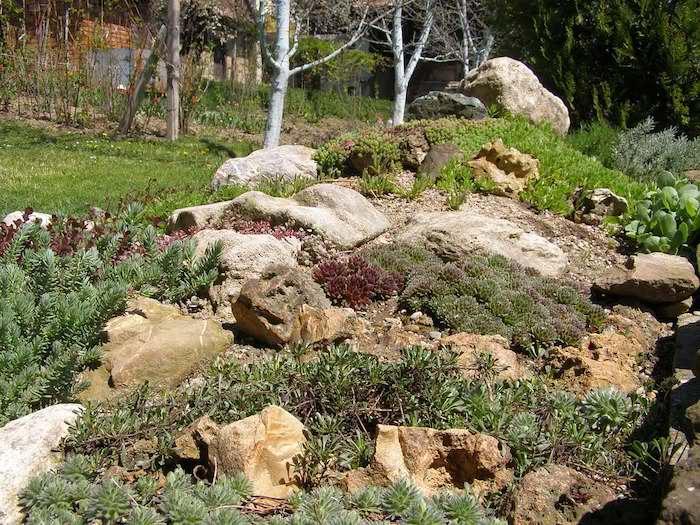 drei weiße birken im garten mit einem grünen rasen, gartengestaltung ideen mit einem kleinen steingarten mit grünen und roten sukkulenten pflanzen für steingarten