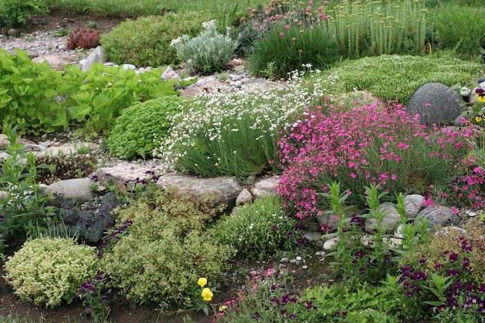 kleine gelbe und viele weiße und violette blumen und sukkulenten in einem steingarten mit grauen steinen
