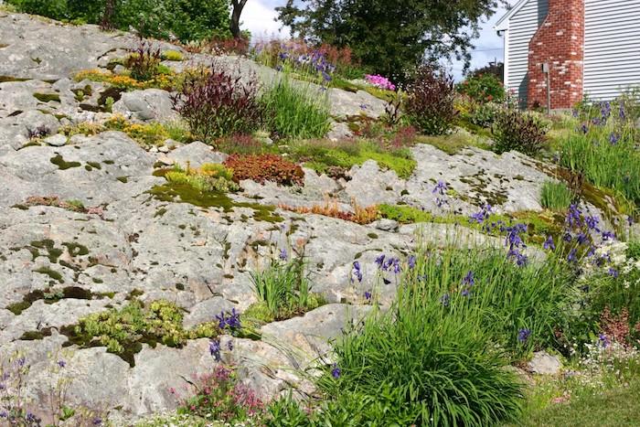 viele graue steine im garten mit violetten und gelben blumen und grünen kleinen sukkulenten, steingarten bilder und ideen