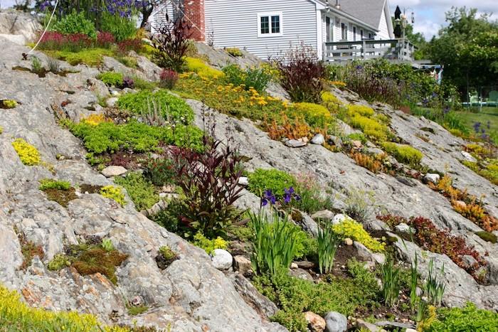 gartengestaltung kleine gärten, ein weißes haus mit kleinem steingarten mit violetten und gelben blumen und sukkulenten pflanzen für steingarten