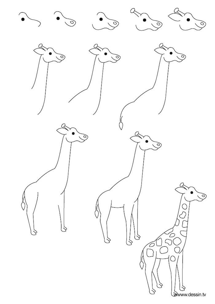 So zeichnet man eine Giraffe, Anleitung in elf Schritten für Anfänger, Zeichnen mit Bleistift