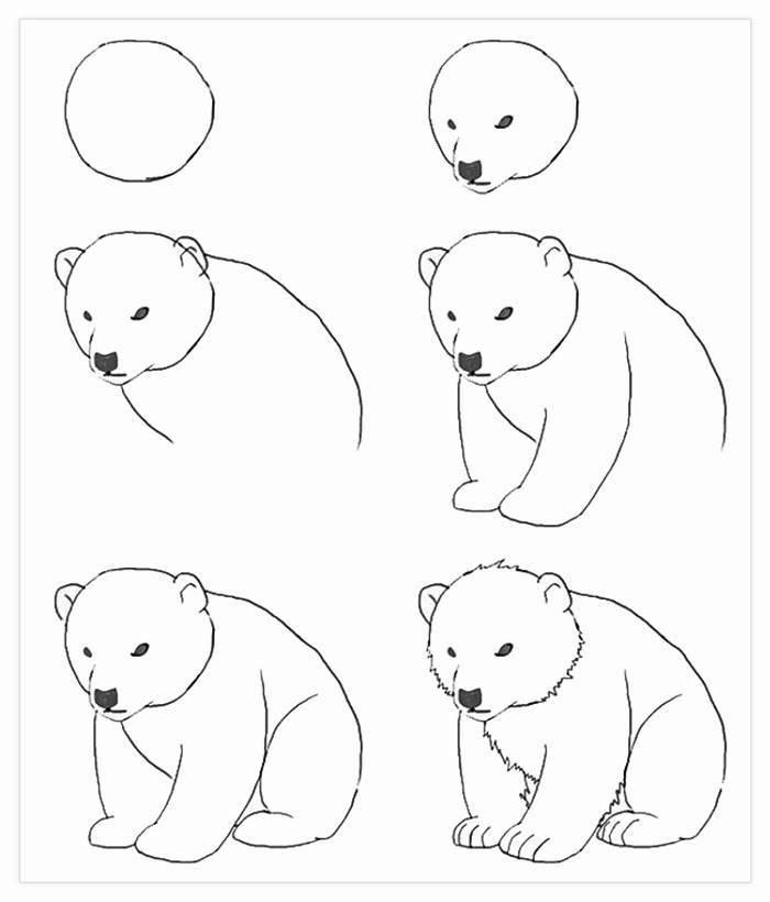 Wie zeichnet man einen Bären, Anleitung in sechs Schritten für Anfänger, zeichnen mit Bleistift