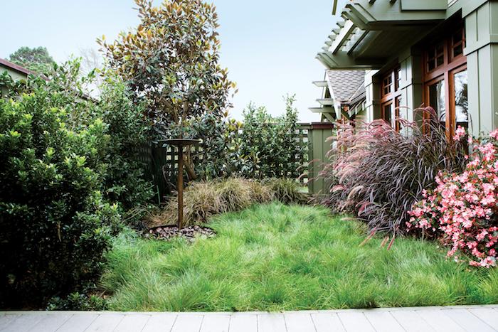pinke blumen und ein baum für vorgarten, rasen und ein sichtschutz aus grünen kletterpflanzen