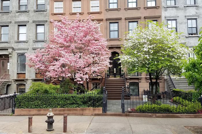 zwei große pinke und grüne bäume für vorgarten, ein vorgarten mit schwarzem zaun, vorgarten modern gestalten