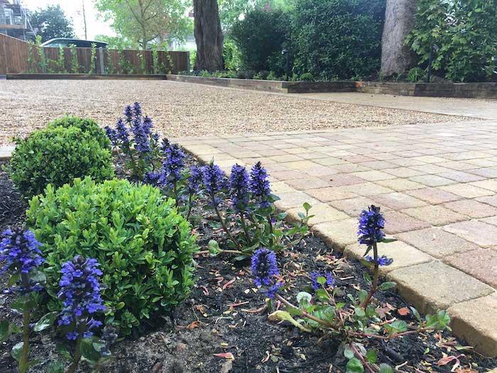 bäume und ein kleinder vorgarten mit violetten kleinen blumen und grünen pflanzen, vorgarten pflanzen