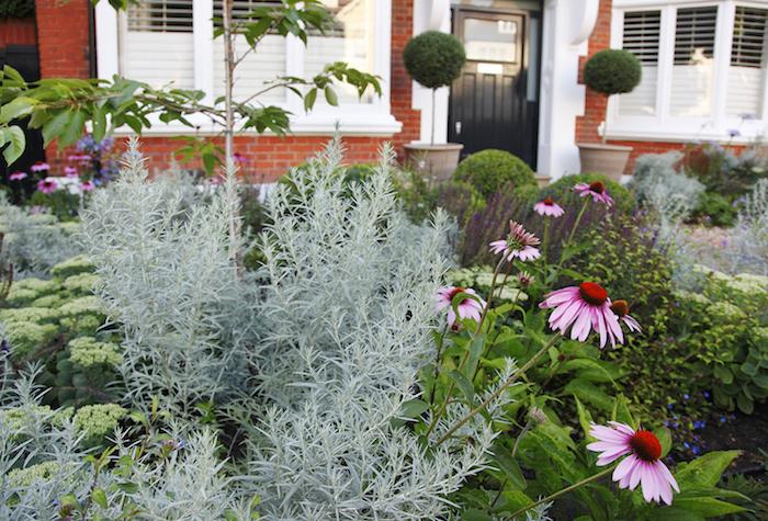 haus mit vorgarten mit pinken blumen und vielen grünen vprgarten pflanzen, vorgarten modern gestalten