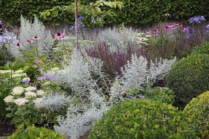kleiner vorgarten mit vielen violetten und pinken blumen und grünen vorgarten pflanzen, vorgarten gestalten ideen
