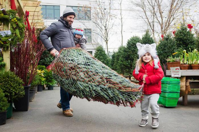 weihnachtsbaum kaufen, mann und kleines mädchen, vater und tochter, tannenbaumkauf tipps