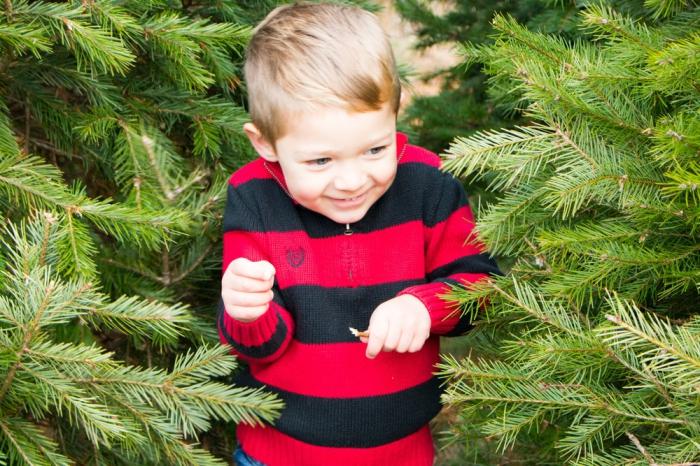 weihnachtsbaum kaufen, viele tannenbäume, kleine junge mit blonden haaren, weihanachten