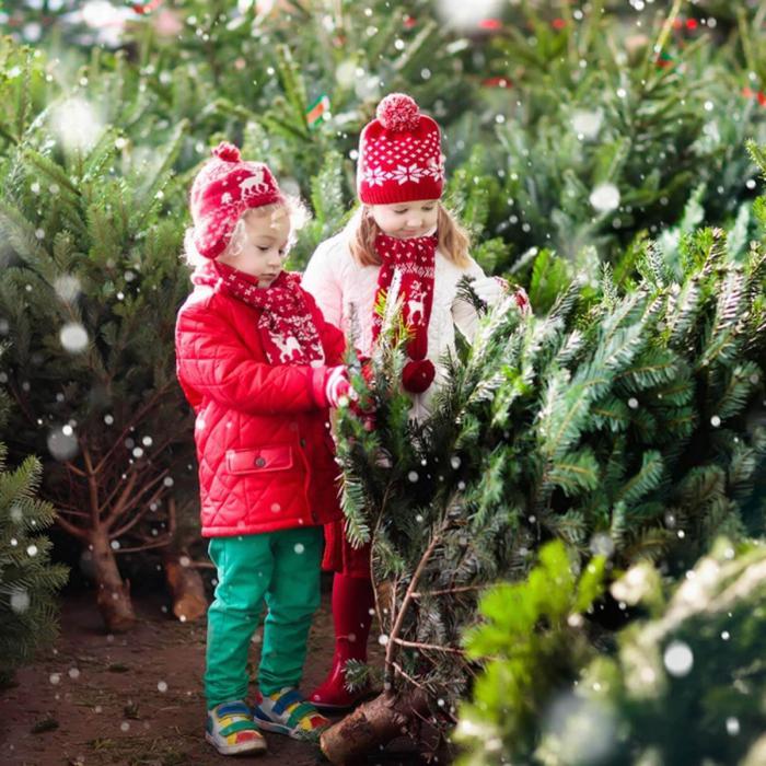 weihnachtsbaum kaufen tipps, zwei mädchen mit blonden haaren, viele tannenbäume, weihnachtbaumkauf