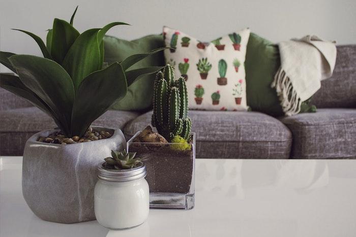 Dekoration die zu jedem Einrichtungsstil passt, Zimmerpflanzen für mehr Frische und bessere Luftqualität