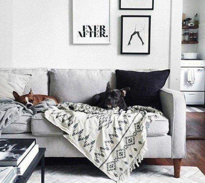 ein graues Sofa, ein schwarzes Kissen, ein weißer Teppich, Wohnzimmer Ideen Weiß Grau