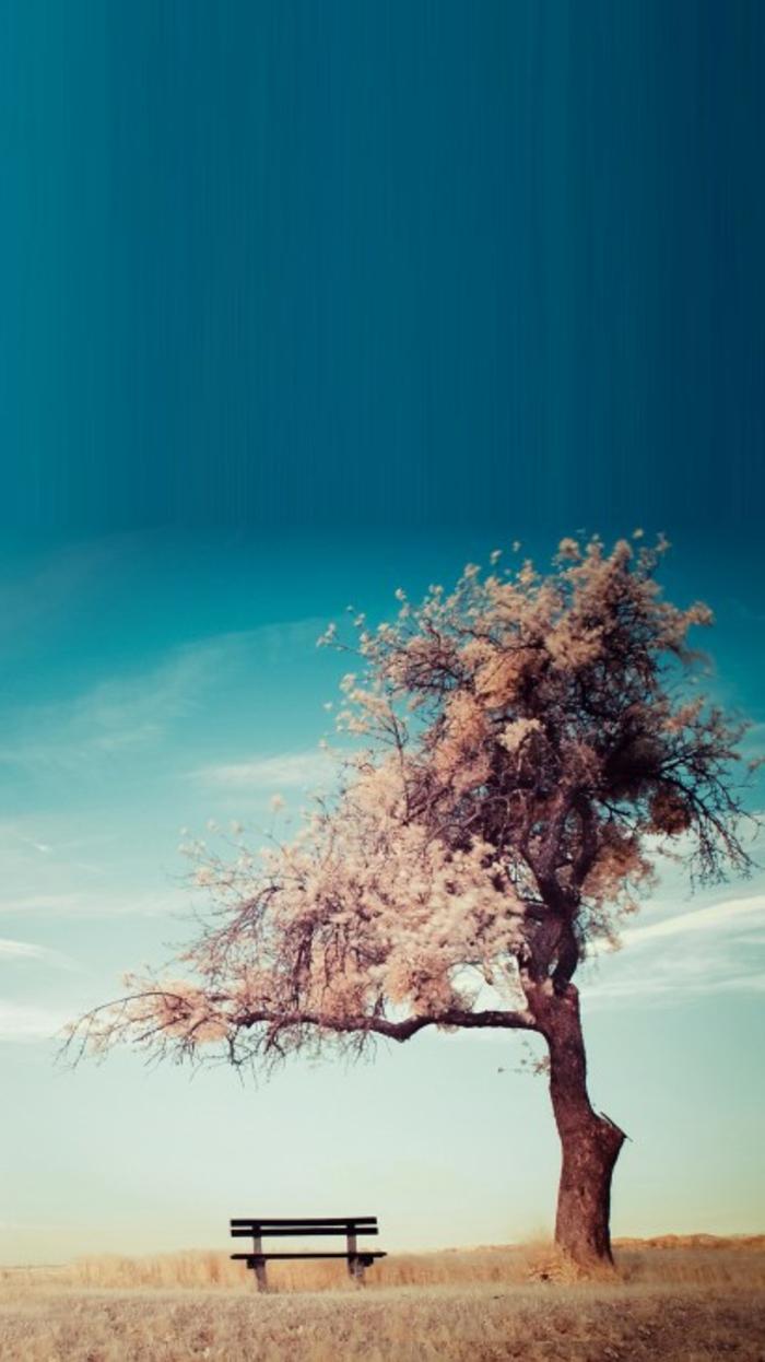 ein blauer Himmel, rosa Baum, gelber Grass, eine Bank, Hintergrundbilder kostenlos, ein rustikales Bild