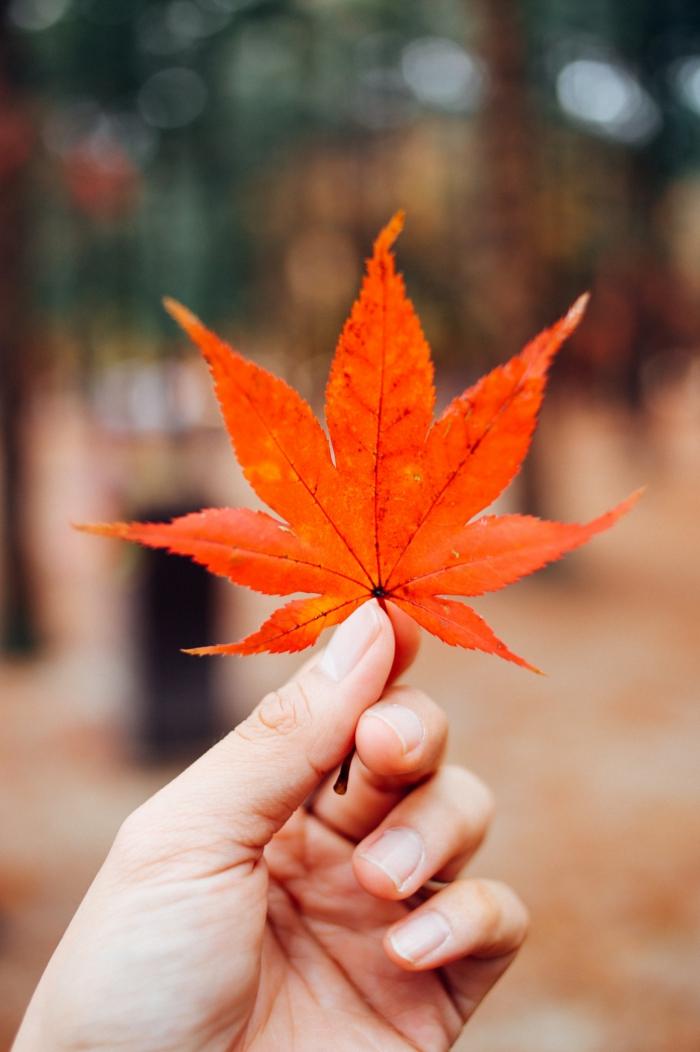 hintergrundbilder kostenlos, eine hand hält großes orangenfarbenes blatt herbstblätter,