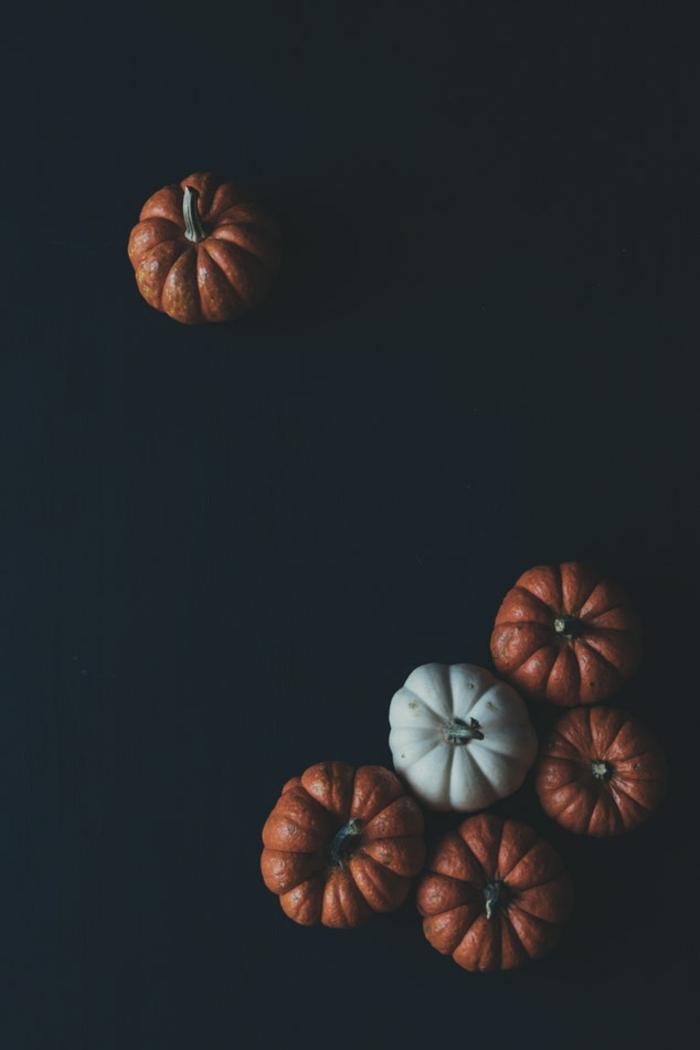 hintergrundbilder kostenlos zum halloween, kürbis sorten orange weiß kürbisse auf schwarzem hintergrund