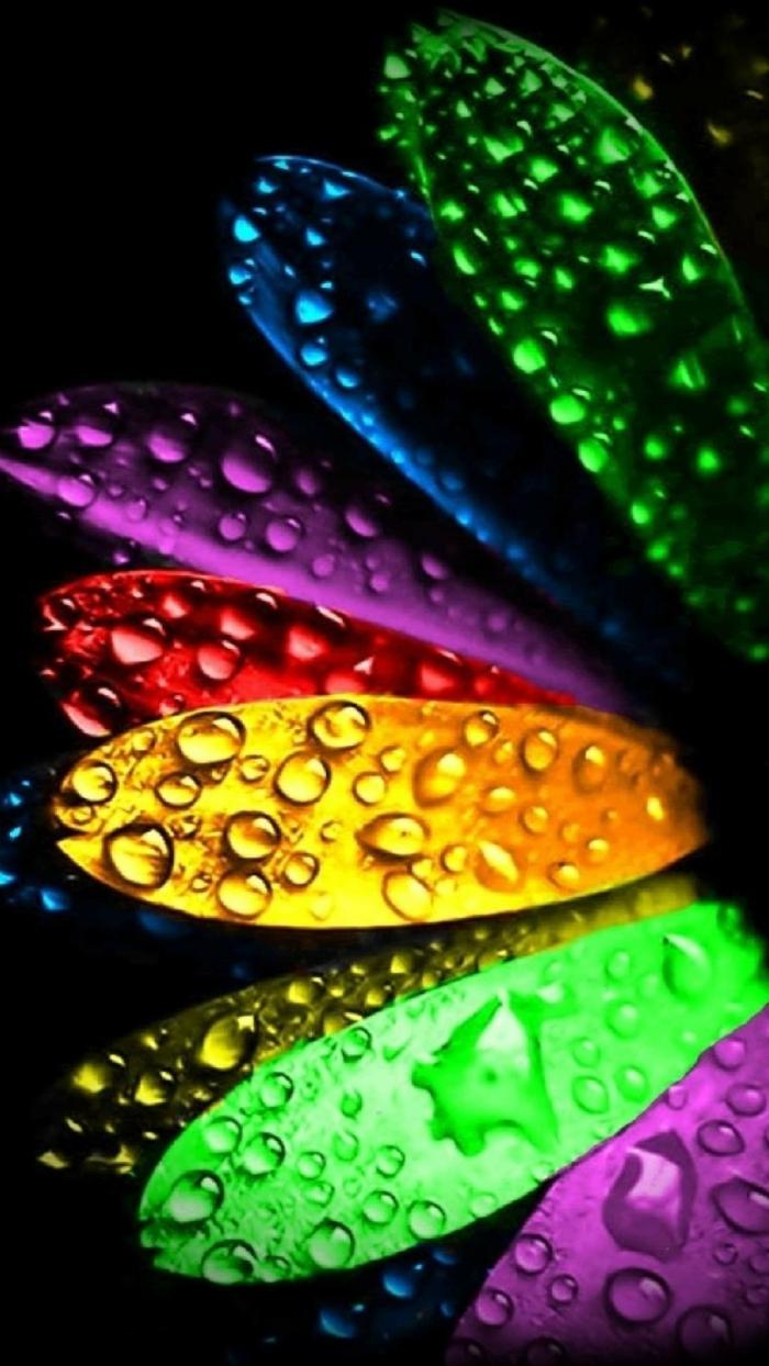 bunte Kronblätter mit Regentropfen bedeckt, coole Hintergrundbilder in vielen Farben, schwarzer Hintergrund
