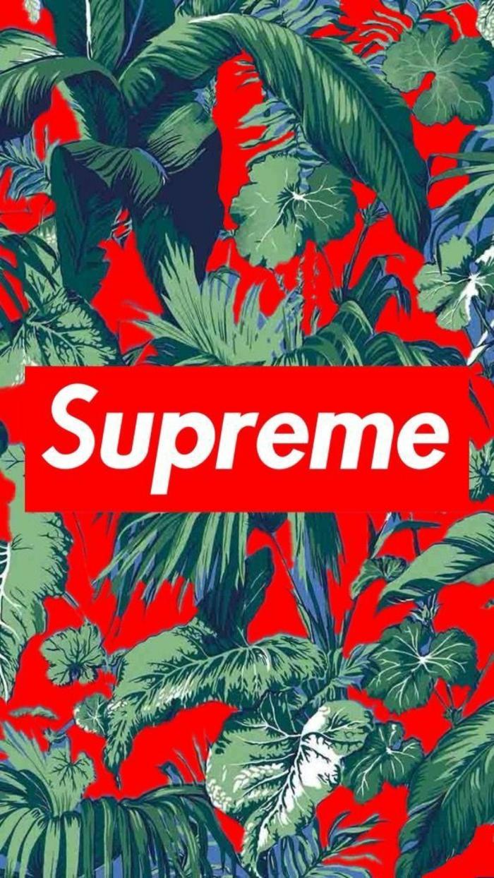 live wallpapers, supreme rot grün hintergrund foto, blumen fotos, pflanzen, rote beeren