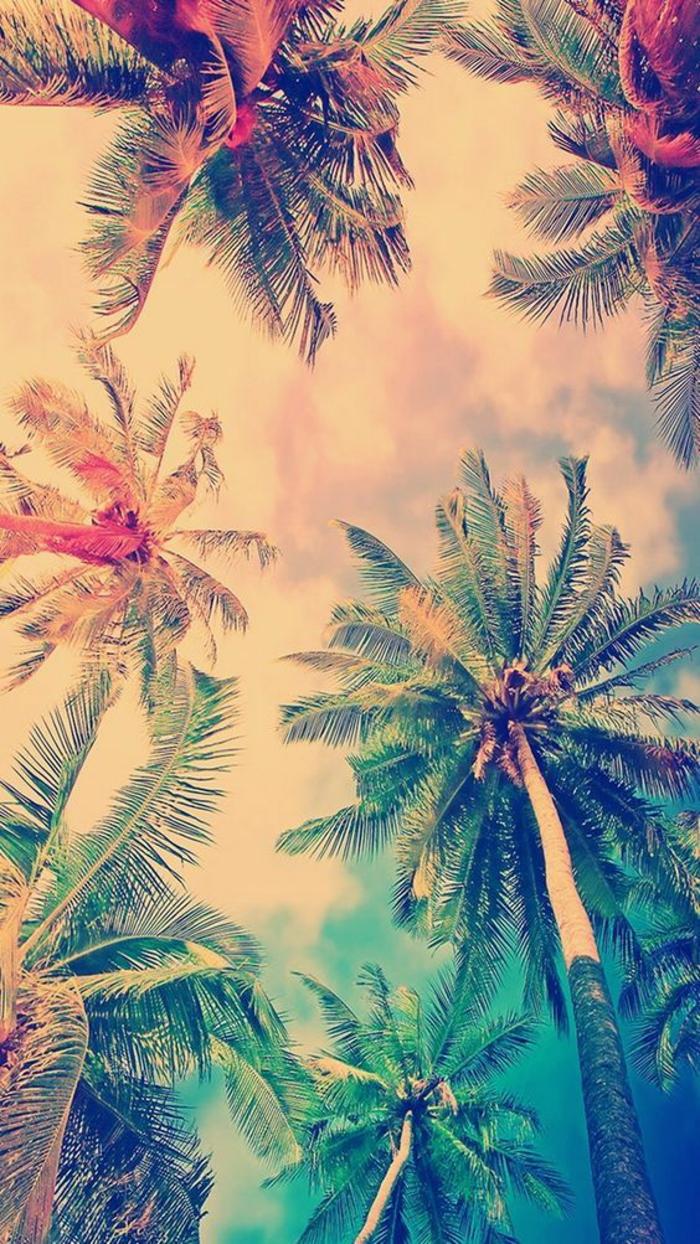 handy wallpaper, exotische palmen, insel, warme farben, ideen exotische insel look, gestaltung von bild künstlich