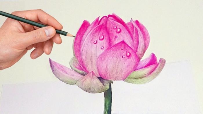 bilder zeichnen, hand große blume, rosa lutus mit tropfen, farbige zeichnung