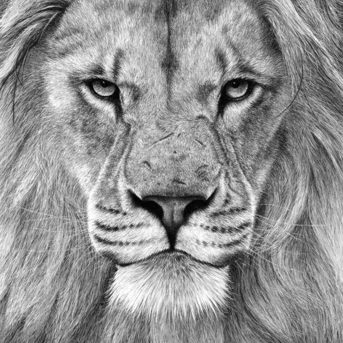 bilder zeichnen, realistische zeichnung, großes löwenkopf, löwe