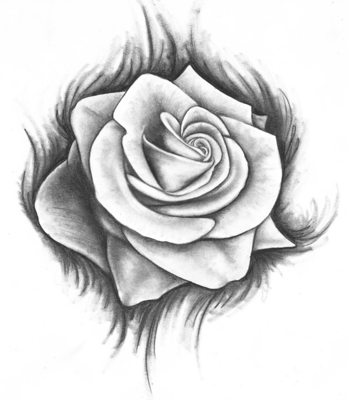 bilder zeichnen, weiße rose, realitische zeichung mit bleistift, schwarz und grau