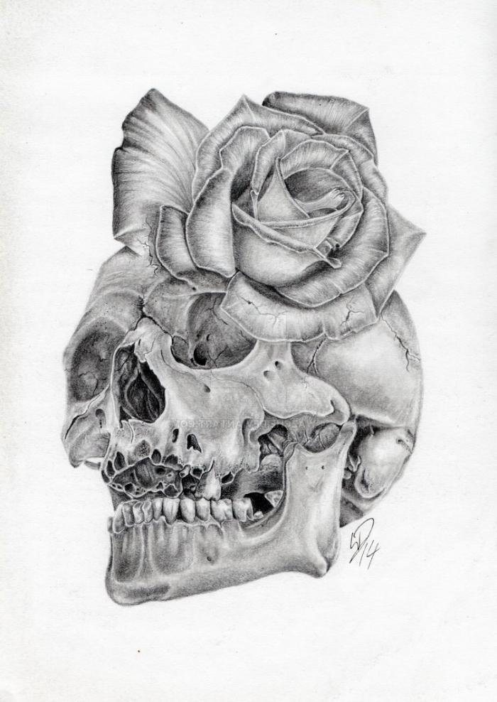 bilder zum nachzeichnen, realitischer schädel in kombiantion mit rose, totenkopf