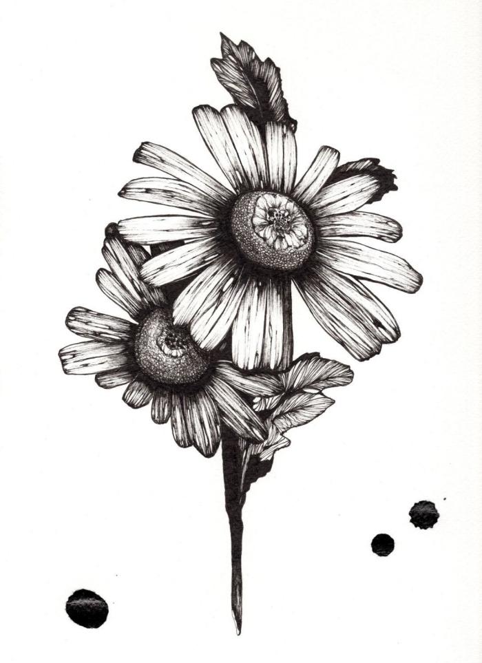 einfache zeichnungen, große blumen, zeichnen mit bleistift, gänseblumen