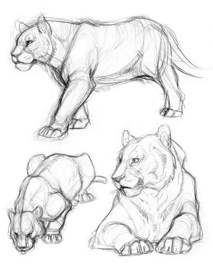 einfache zeichnungen, löwin zeichnen lernen mit bleistift, wildtier