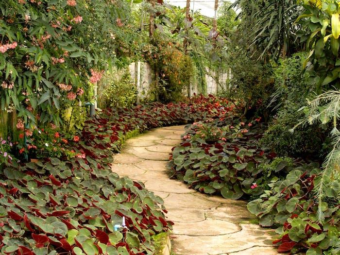 Den Garten in eine grüne Oase verwandeln, Pflasterweg harmonisch einfügen
