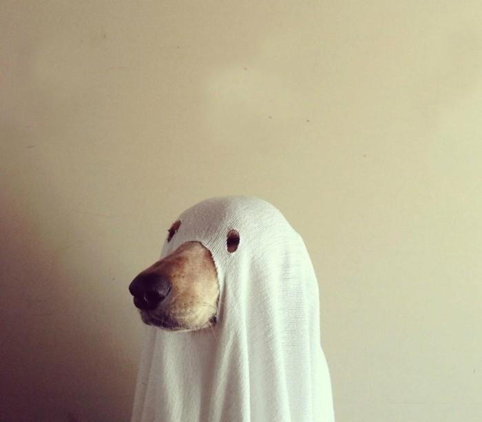 einfache halloween kostüme für die ganze familie, das haustier kann auch verkleidet werden, eine coole idee