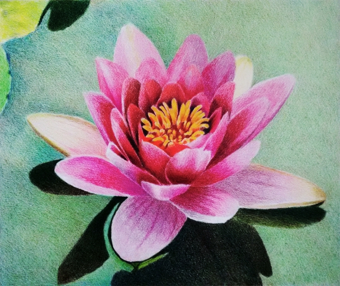 große blume, ideen zum zeichnen, rosa lotus im wasser, farbige zeichnung