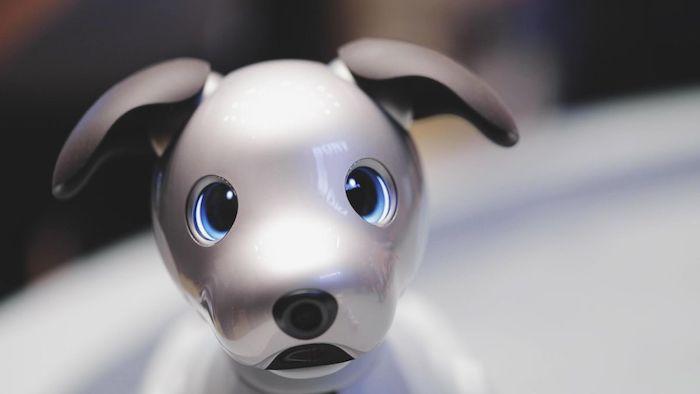 grauer kleiner robo hund mit zwei blauen großen augen und zwei grauen ohren und einer kleinen schwarzen nase, aibo von sony