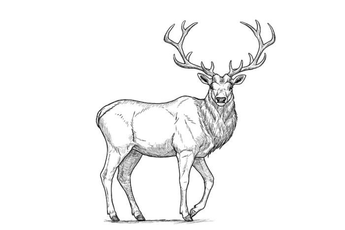 motive zum zeichnen, hirsch zeichnung in schwarz und grau, großes geweih, wildtier