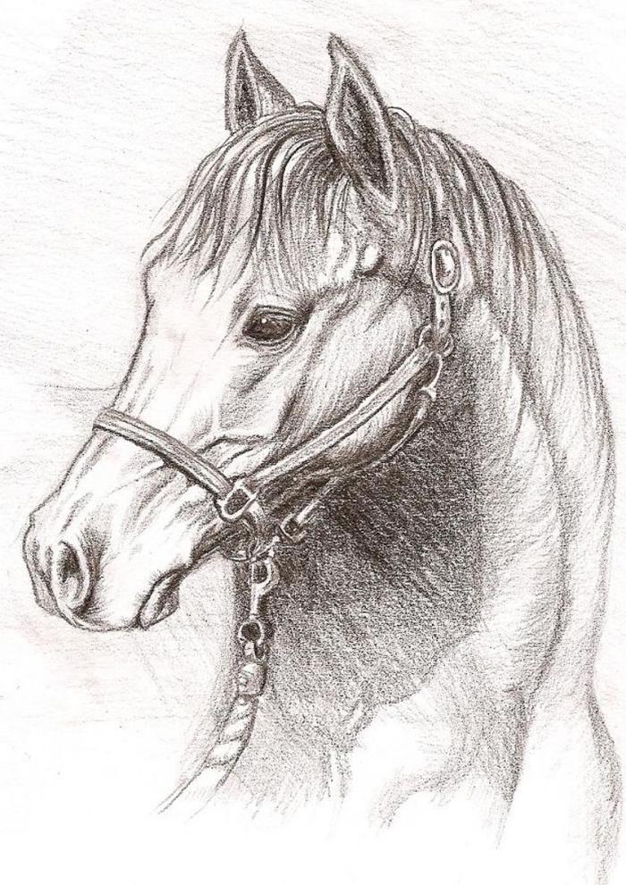 realitische zeichnung, motive zum zeichnen, detailliertes pferd, tier