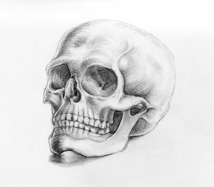 motive zum zeichnen, realitischer schädel, wie zeichnet man totenkopf