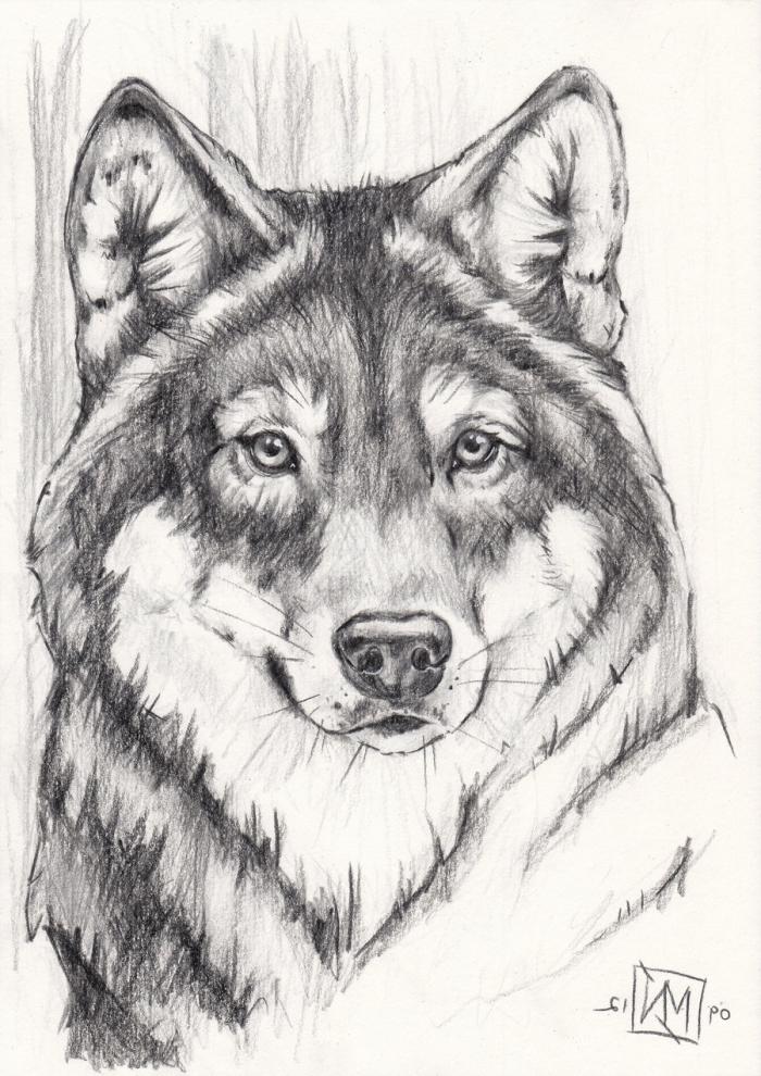 realitische wolf zeichnung, motive zum zeichnen, wolfkopf in schwarz und grau